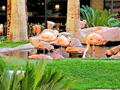 Wildlife Habitat Exhibit at the Flamingo Hotel in Las Vegas
