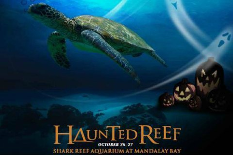 Haunted Reef at  Mandalay Bay Las Vegas