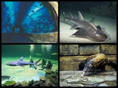 mandalay-bay-aquarium