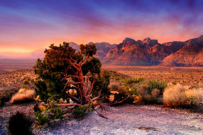 Hotels Near Red Rock Canyon