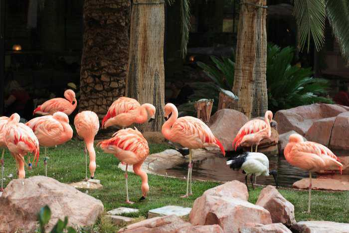 wildlife-habitat-flamingo-las-vegas