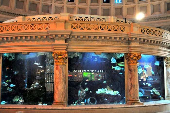 aquarium-forum-shops-las-vegas