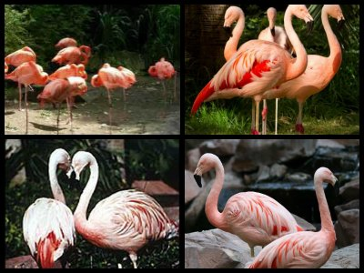 Flamingo Wildlife Habitat in Las Vegas