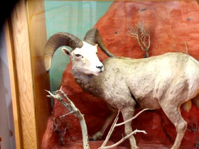 Lost City Museum in Overton Nevada