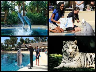 Attractions at the Mirage Hotel in Las Vegas