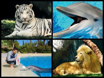 Siegfried & Roy's Secret Garden and Dolphin Habitat in Las Vegas