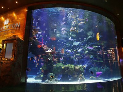 Top things to do in las vegas with kids for Tropical fish las vegas